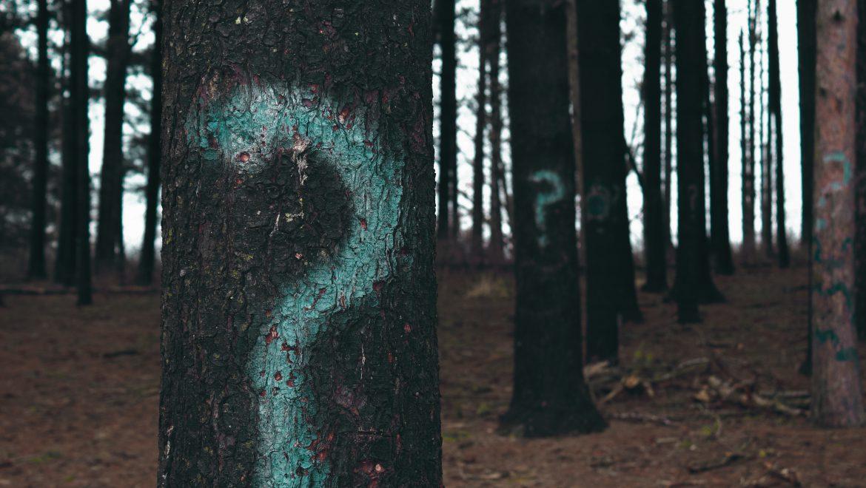 פארק איילון- שאלות לדיון